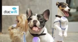 泰國開創性實驗行銷—打造寵物行動熱點,讓上網不只是上網!