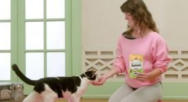 貓咪們一起來健身!?可愛死人不償命的病毒式影片行銷 from TEMPTATIONS