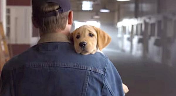 今年超級盃最棒廣告「Puppy Love」-向狗和馬學習建構超越