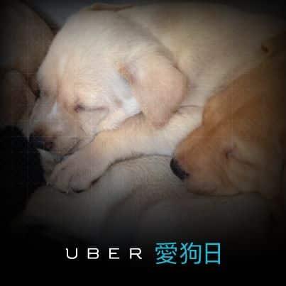 Uber dog