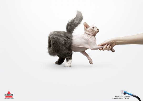 hairless-clean-persian-cat-small-74730