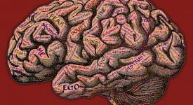 【消費者心理學】心理學駭行銷 - 腦神經行銷學